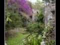 Garden #14