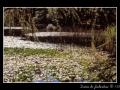 Marsh #01