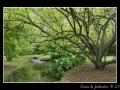 Creek #05