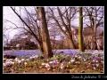 White flowers #02