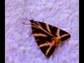 Butterfly #02