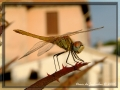 Dragonfly #01