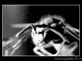 Wasp #03