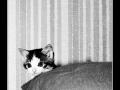 Kitty #01