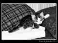 Kitty #03