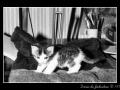 Kitty #04