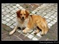 Dog #03