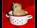 Kitten in the cup
