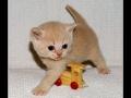 Kitten & Toy