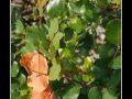 Leaves #02