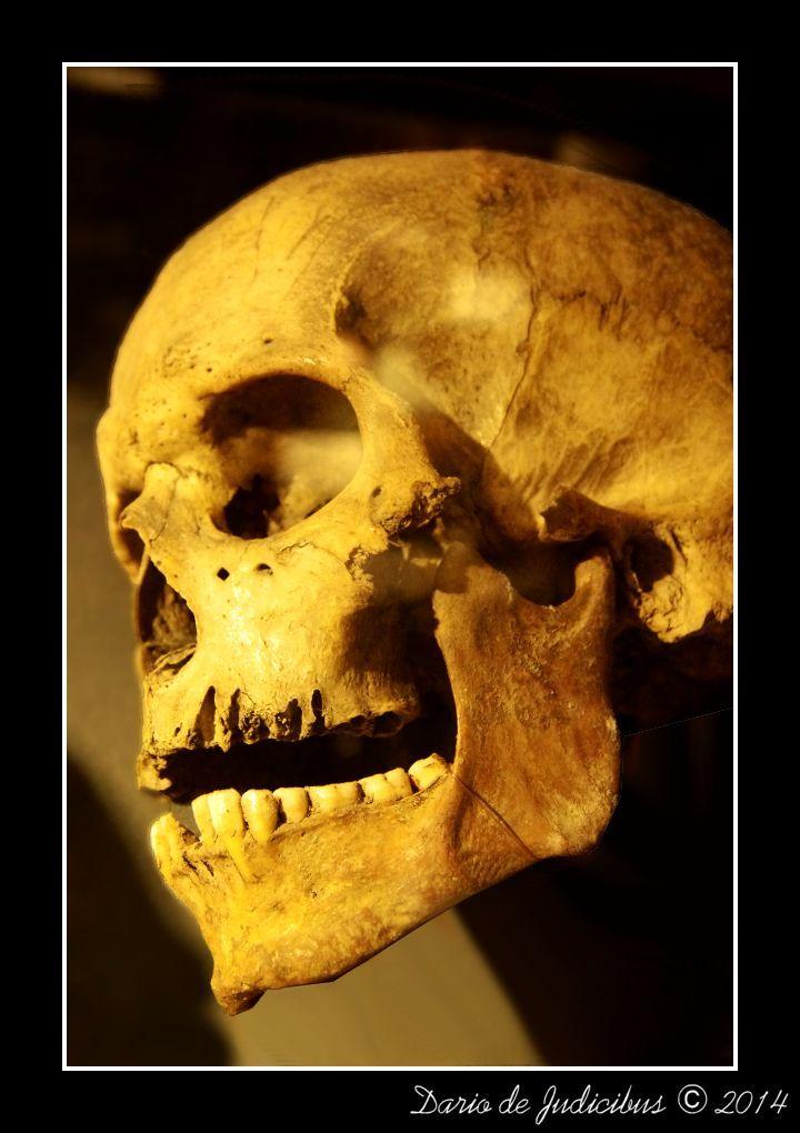Skull #01