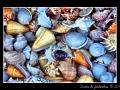 Shells #01