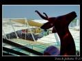 Antelope #02