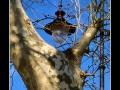 Street lamp and tree