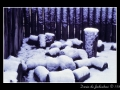 Snow #02