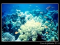 Red sea #2