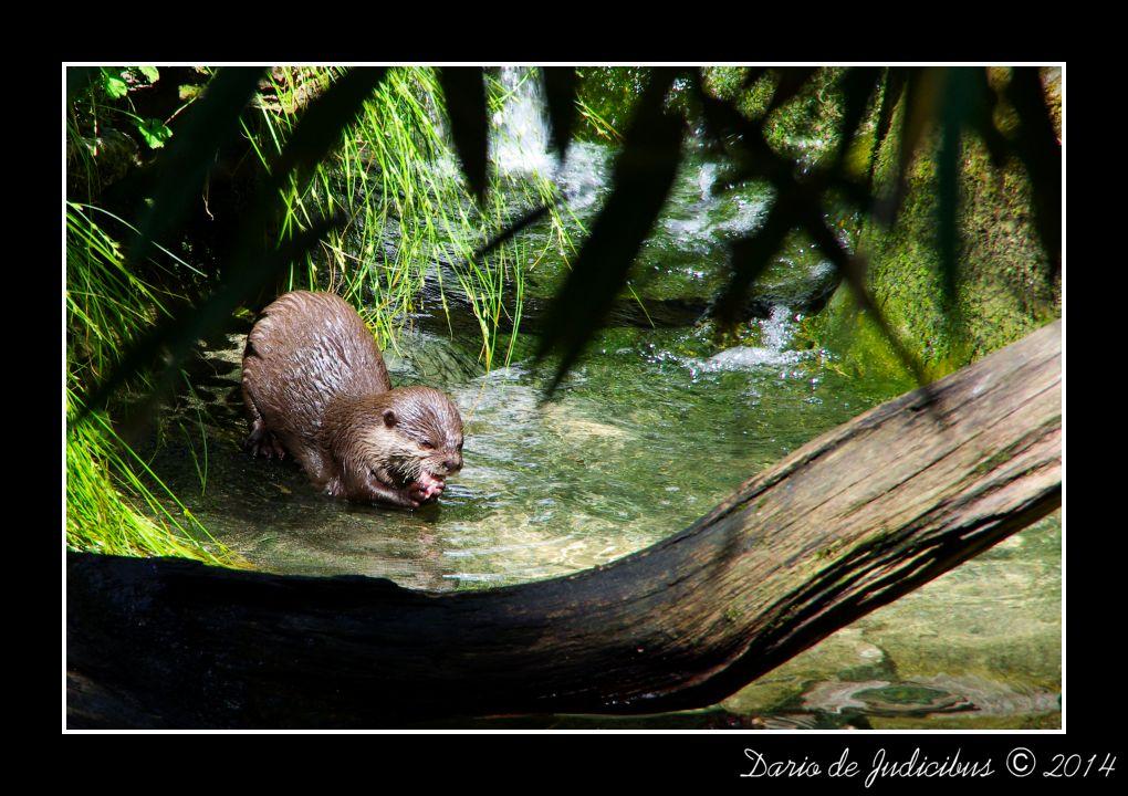 Otter #1