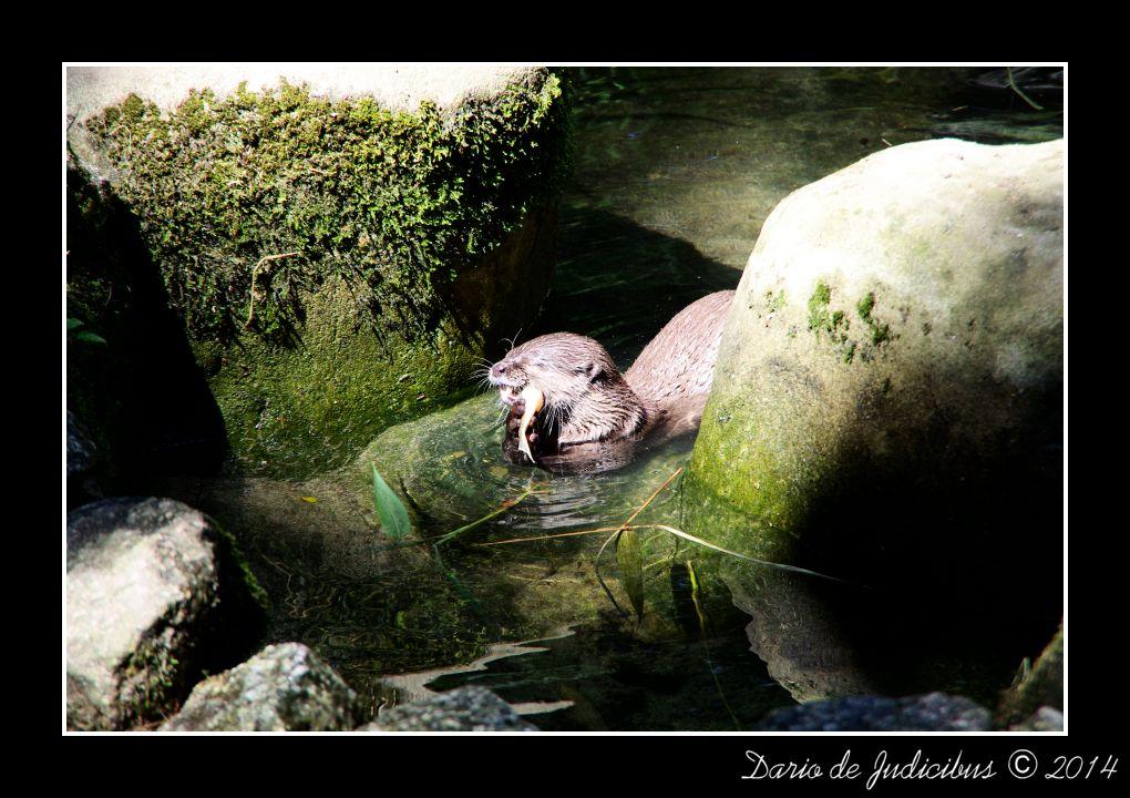 Otter #3