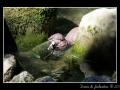 Otter #2