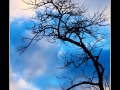Tree #07